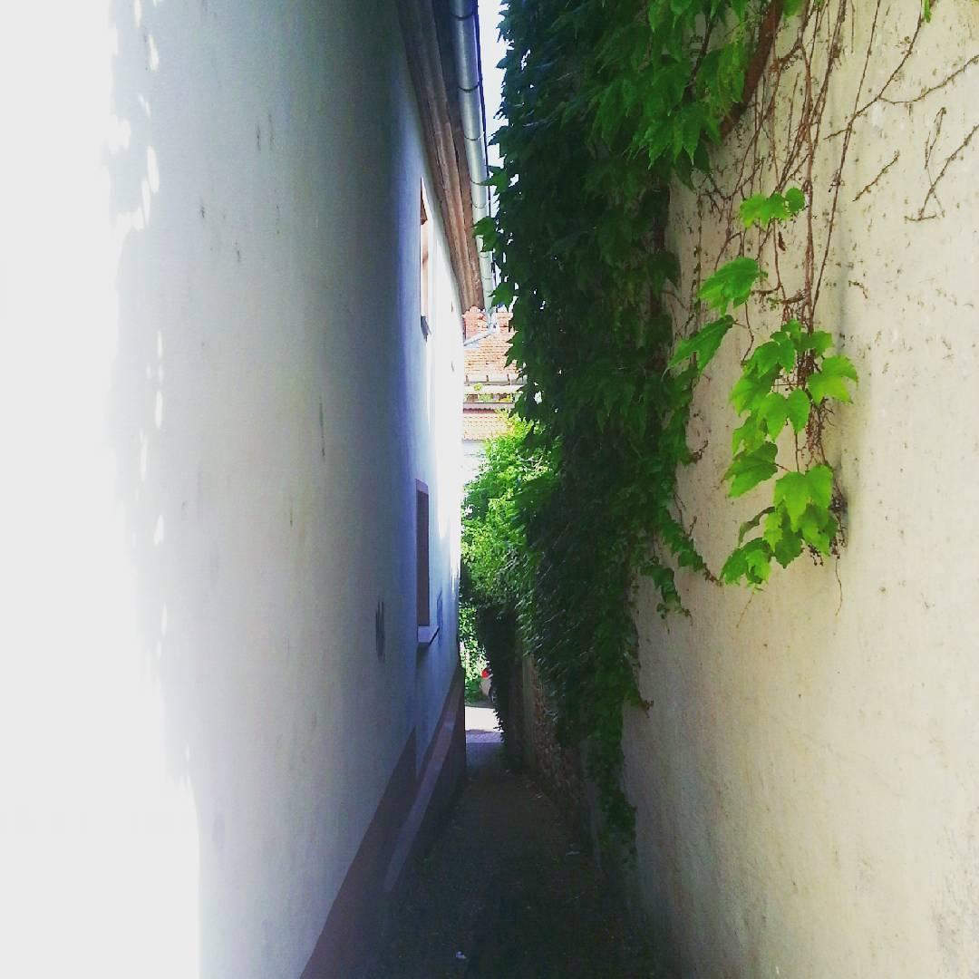 Die Straßen in der Seligenstädter Altstadt sind meistens sehr schmal. Diese kleine Gasse hier, stellt aber vermutlich einen Rekord dar, was die Enge betrifft. Ich habe mich nicht mal getraut, mit dem Fahrrad durch zu fahren 🙈 (zu Fuß geht es