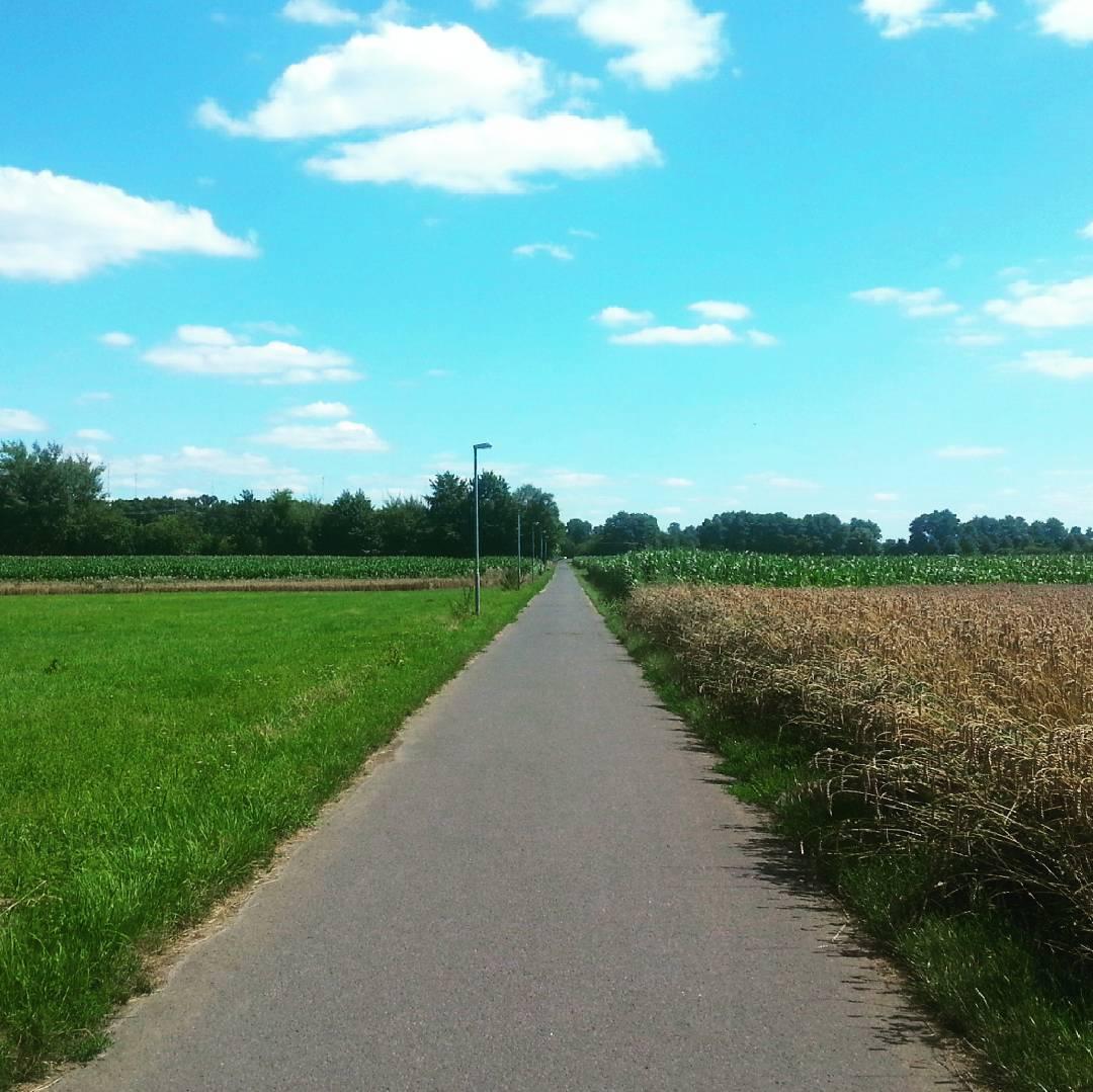 Der Radweg von Seligenstadt nach Zellhausen ist nicht nur ein häufig genutzter Schulweg, sondern auch ein hübscher Ort für einen Spaziergang