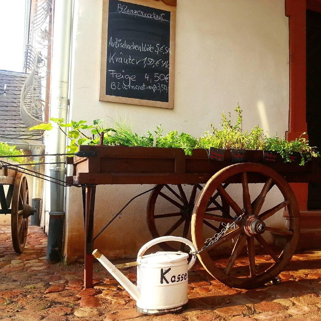 Im Klostergarten kann man kleine Pflanzen kaufen, die dann in der ...