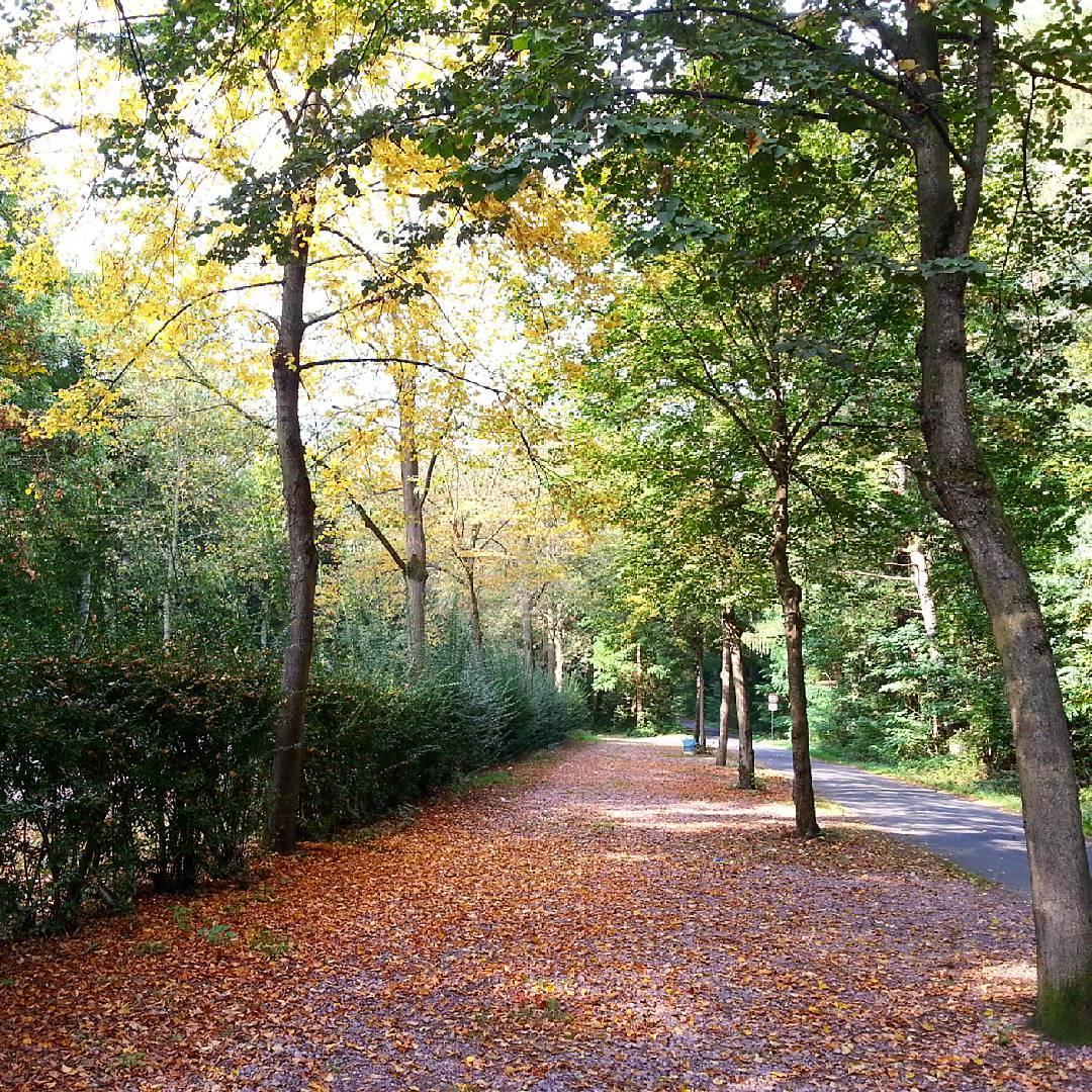 So langsam wird es Herbst. Die meisten Bäume im Wald sind zwar noch grün, dennoch sieht man schon viele der Bunten Blätter von den Bäumen segeln