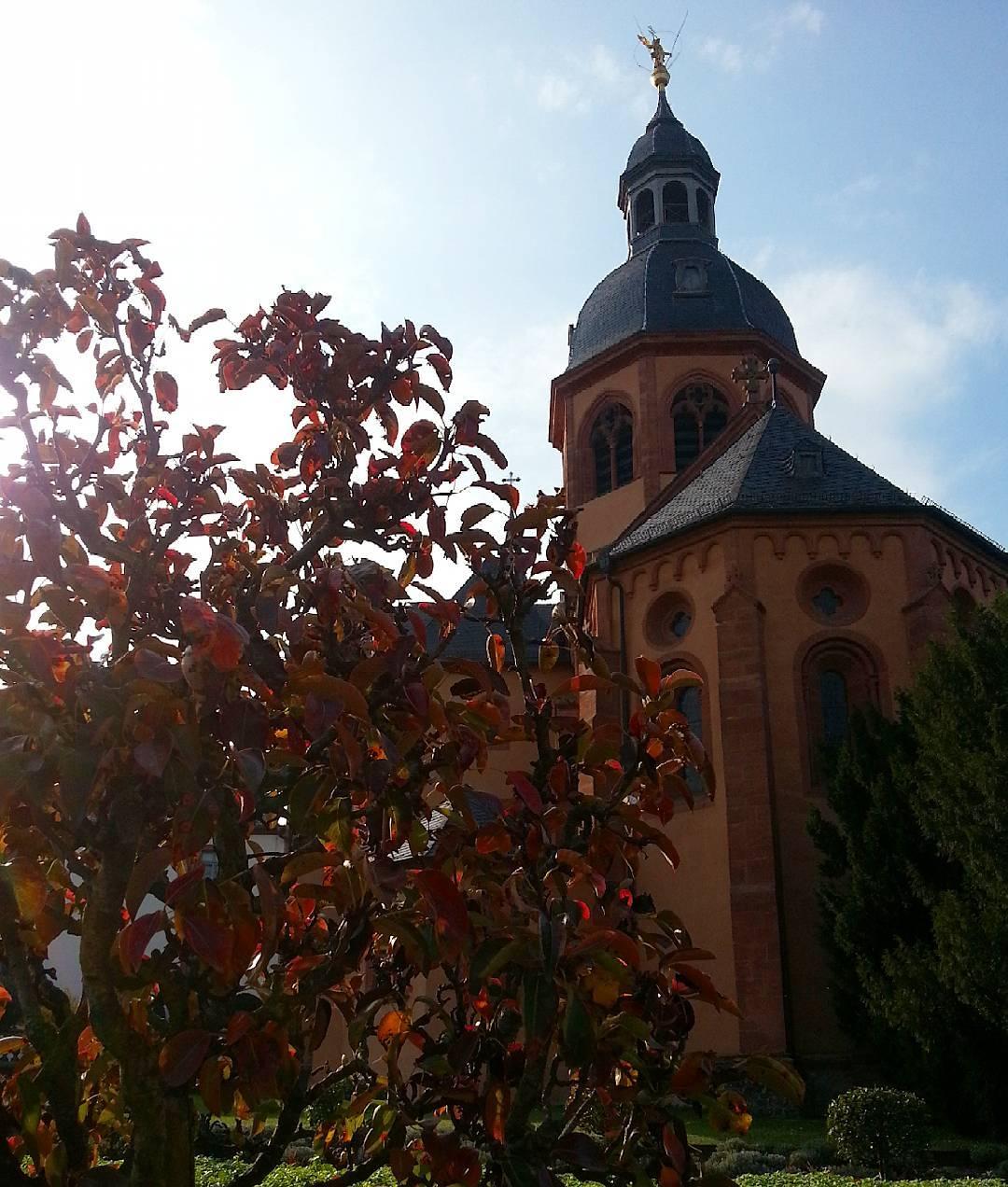 Herbst ist, wenn im Konventgarten die Zierpflanzen ihre Farbe ändern