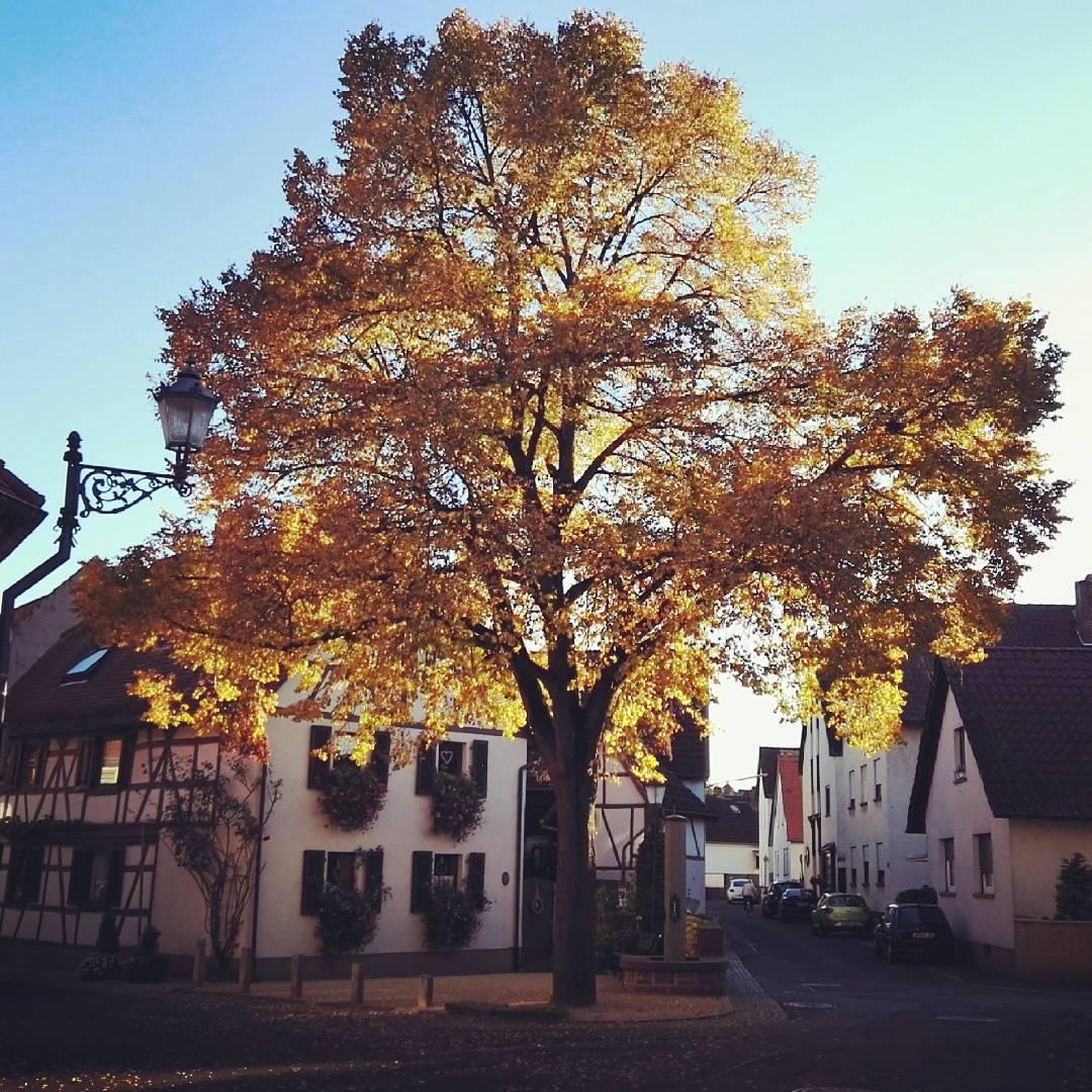 Herbststimmung am Klaa Frankreich