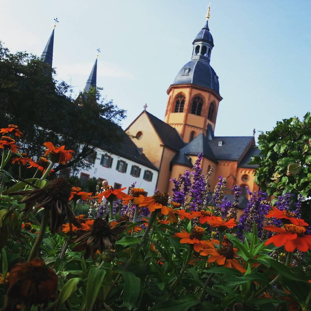 Die letzten Blüten diesen Sommer im Konventgarten