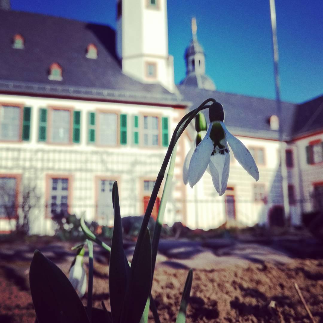 Im Klostergarten habe ich heute diesen kleinen Frühlingsboten fotografiert