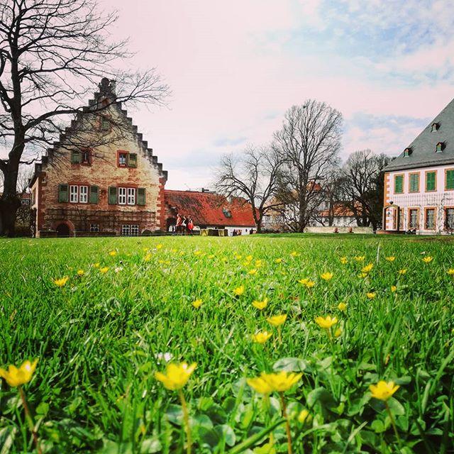 Frühlingsblumen auf dem Rasen im Klostergarten