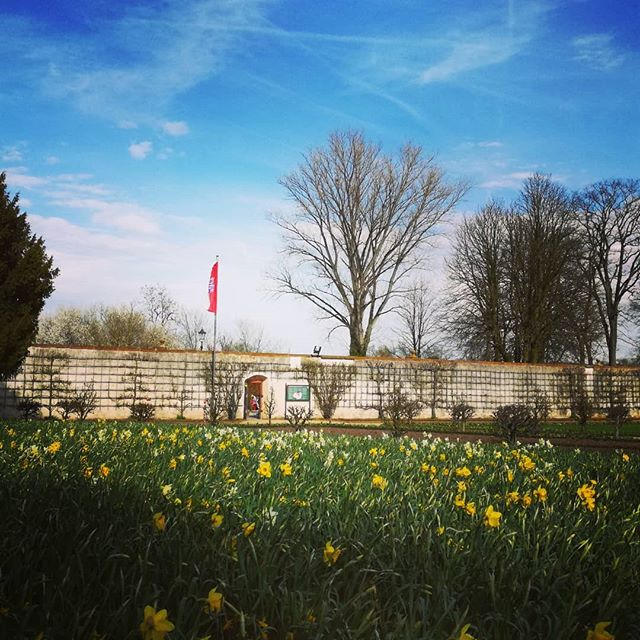 Ein Blütenmeer aus Osterglocken befindet sich aktuell im Klostergarten. So langsam kommt der Frühling an, richtig schön wird es, wenn bald auch die anderen Blumen blühen