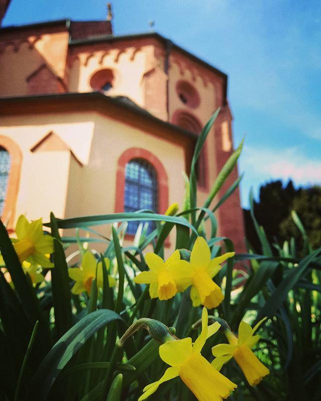 Der Frühling ist da! Im Klostergarten hinter der Basilika