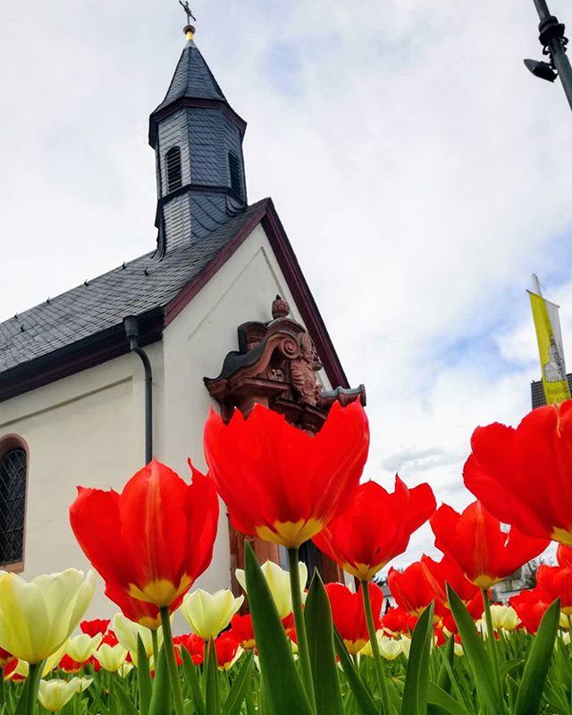 Der Klostergarten ist nicht der einzige Ort, wo gerade Tulpen wachsen. Hier zum Beispiel am Kapellenplatz