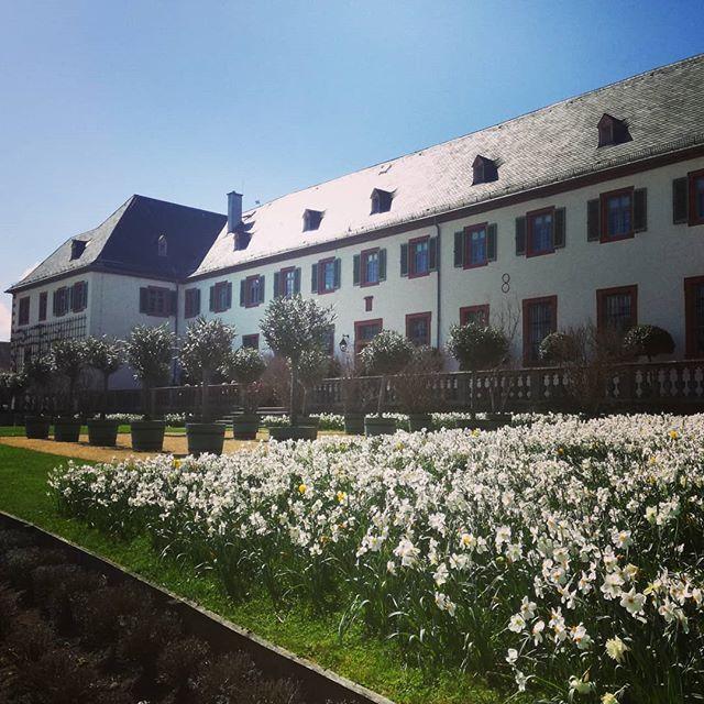 Klostergarten mit Blick auf das Klostercafé und weißen Narzissen
