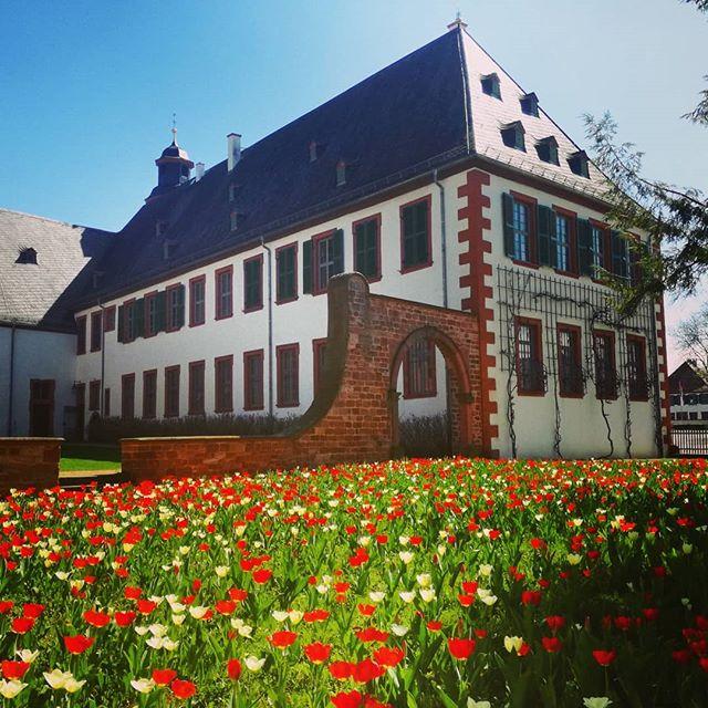 Noch ein Bild der Tulpen im Klostergarten. Das Wetter ist aktuell perfekt für einen Spaziergang in der Altstadt oder zum Eis essen. Wie nutzt ihr die schon sommerlichen Temperaturen?