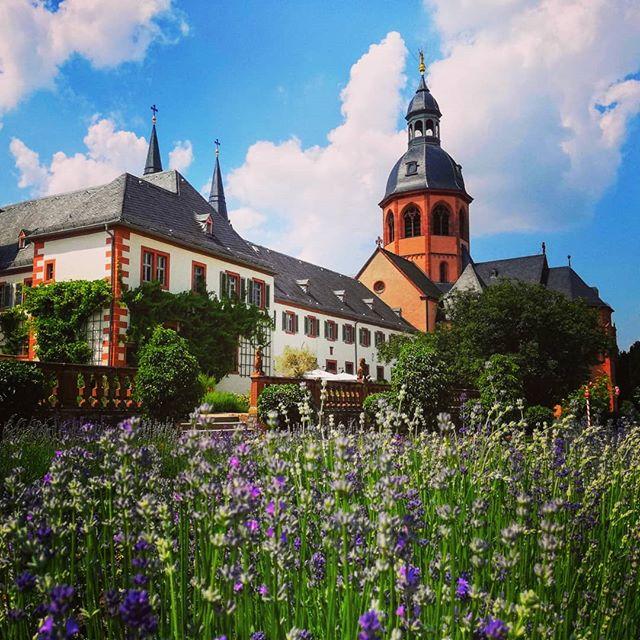Der Lavendel im Klostergarten blüht