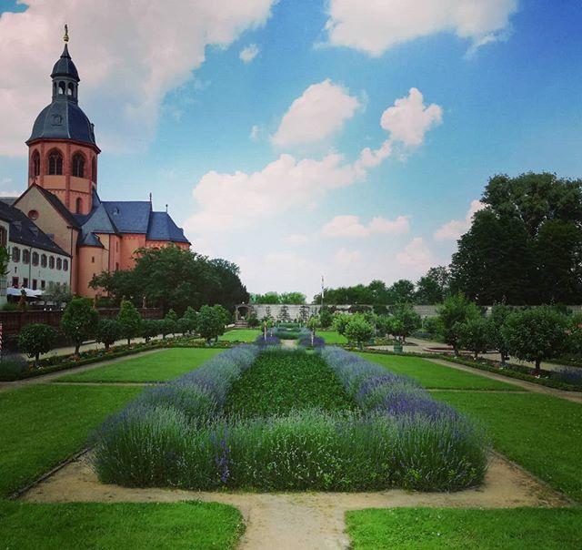 Lavendel im Klostergarten