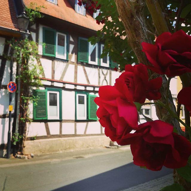 Viele Seligenstädter pflanzen Blumen an ihre Häuser, was nicht nur schön aussieht, sondern mir die Möglichkeit zu Bildern wie diesem gibt. Danke dafür
