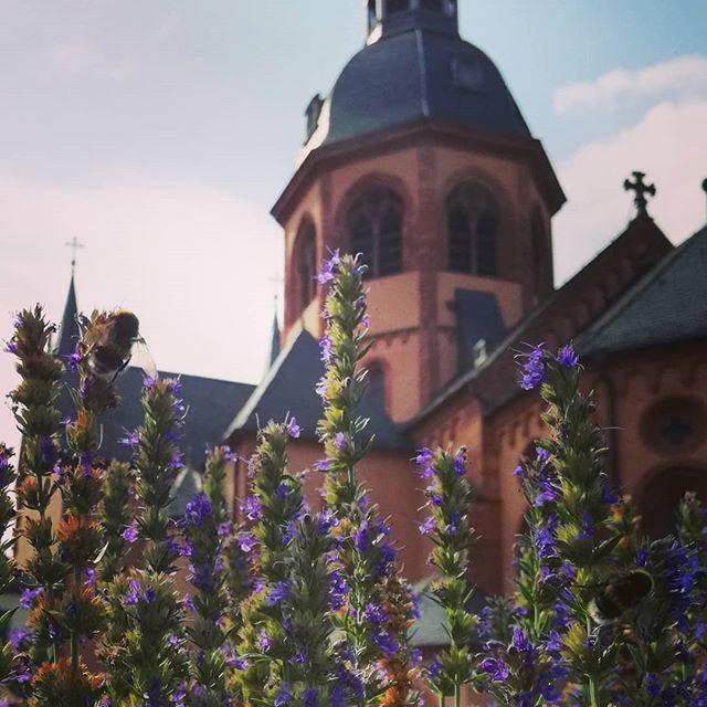 Basilika mit Bienchen und Blümchen. Zugegeben, es ist eine Hummel und Lavendel – klang aber schöner